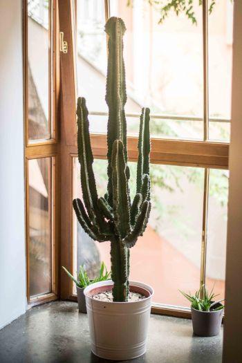 ginko-greenhouse-kaktus